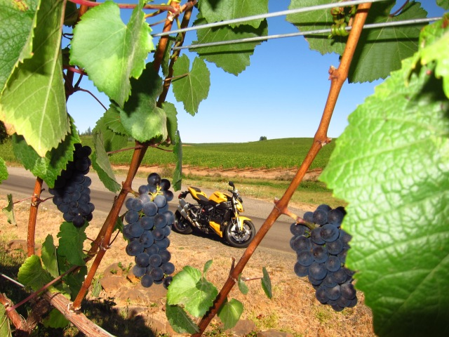Soon it will be wine. Willamette Valley, September 16th, 2012