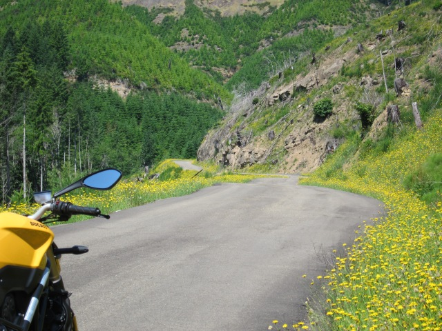 Yellow-flowered road. July 8th 2012