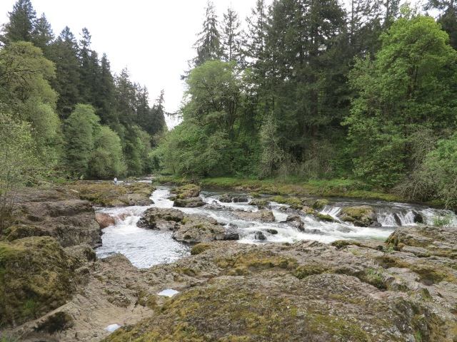 Calapooia River, Brownsville, OR. April 28th, 2013