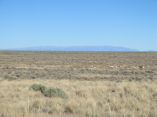 Antelopes, sage brush, and the Steens Mountain on the background