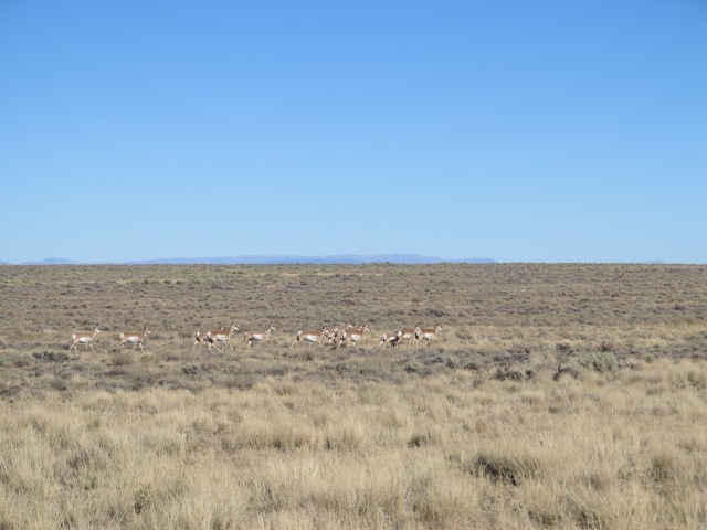 Antelope, Steens Mountain on the background