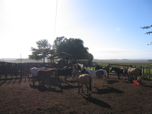 Rancho Las Flores, Vichadero, Uruguay, April 2006