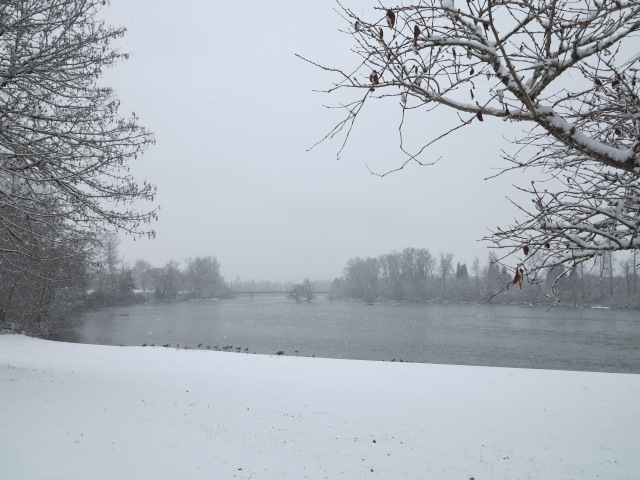 Snow in the Willamette valley. December 6th, 2013
