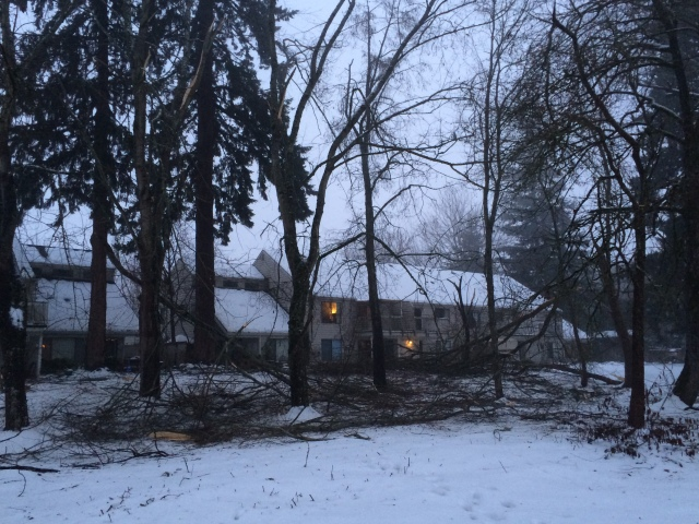 Minor tree branches on the ground, throughout the area.