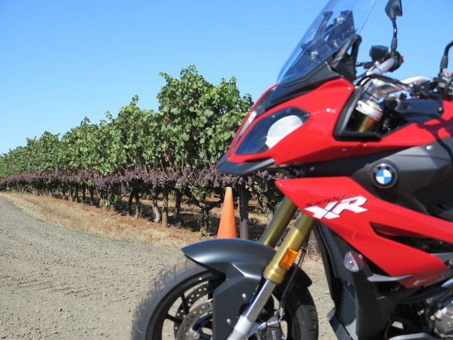 Check those grapes, they are almost ready to be picked to become a nice Pinot Noir wine.